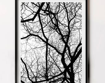 Forest Print, Black and White Tree Photo, Tree Branches Print, Nature Photography, Print at Home Art Photography, Digital Download