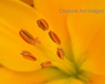 Orange Flower Print #114