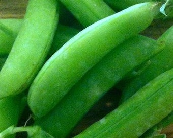 SALE Sugar Ann Short Variety Snap Pea Organically Grown Excellent Flavor and Quality Heirloom Seeds