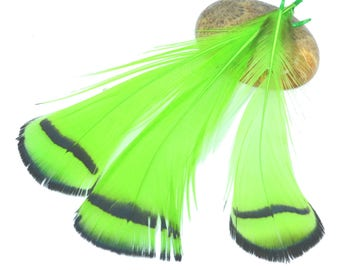 5 lime green and white natural feathers 7 / 9cm