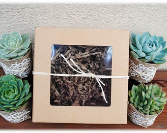 Hostess Gift-Succulent Box-Succulent Gift Box-Assorted succulents-Get Well gift-Sympathy Gift-Housewarming Gift-Birthday Gift-Succulent Gift