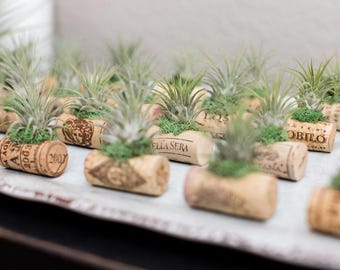 25 Wine Cork Air Plant Wedding Favor Magnets