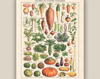 Kitchen art, vegetables print, botanicals, kitchen art, educational poster, kitchen decor, kids room decor, playroom wall decor, 11x14