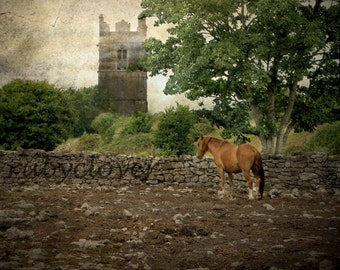 My KINGDOM for a HORSE, Ireland Landscape Photo, Old MEDIEVAL Castle, Equine Photography, Irish Nature Print, Masculine Gift, Galway, Ginger