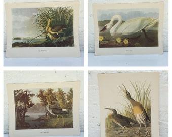 SET, Audubon Prints bird prints Baltimore Oriole print Roger Tory Peterson wall decor