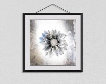 Gazania, Botanical Prints, Flower Photographs, Flower Wall Art, Romantic Art, Square Print, Nature Art, Flower Wall Decor, Bedroom Prints