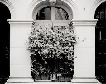 window box, Paris 2014.