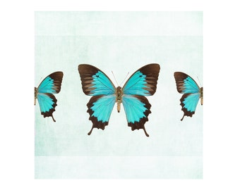 Turquoise Butterfly art print, butterfly photography, butterflies artwork, wall art, kids decor nursery decor, bathroom decor fine art print