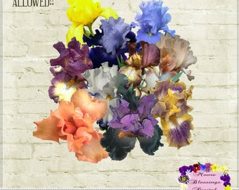 Tennessee Iris Collection Digital Elements ~ Commercial Use