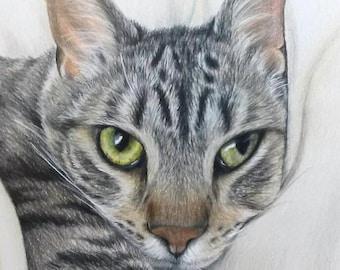 Cat Pet Portrait Hand-Drawn 8 x 10 Colored Pencil Art by Carla Kurt cat dog horse Custom memorial