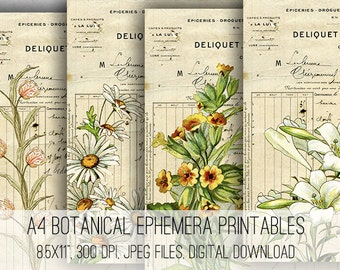 A4 Botanical Ephemera Digital Collage Sheet Download -1049- Digital Paper - Instant Download Printables