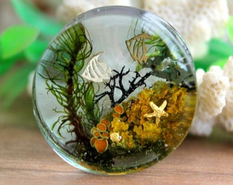 Ocean resin plugs, algae marine gauges, water mermaid, plugs and tunnels, nature terrarium, ocean algae, orange lichen, transparent plugs