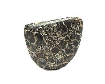 Fossil Snail Turritella Cabochon, Polished Semiprecious Petrified Organic Gemstone, DIY Stone Craft Jewel,  Wyoming Prehistoric Life Geo Gem