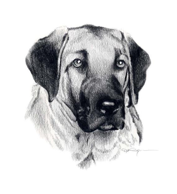 Anatolian Shepherd Dog Art Print Signed Dj Rogers
