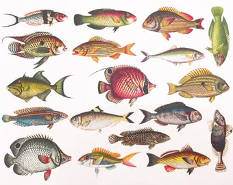 Colorful Fish #1 - Glass Fusing Decal, Ceramic Decal, Enamel Decal