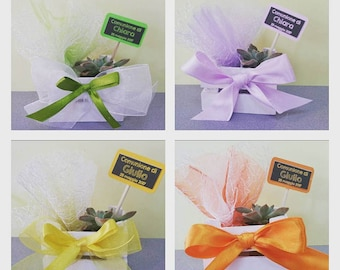 Favor communion wooden chest of drawers with bow, seedling with customizable tag, tulle confetti