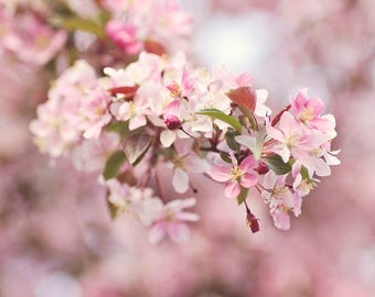 Pink Flower Print, Pink Flower Wall Art, Pastel Photography, Floral Photography, Large Flower Art Cherry Blossom Art Pink Flower Photography