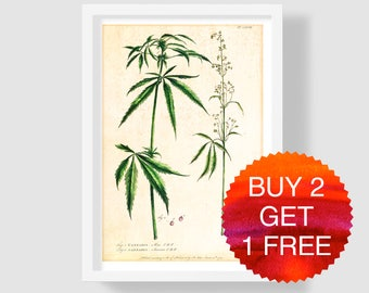 Cannabis Art Print, Cannabis Illustration, Botanical Art Print, Cannabis Kitchen Art, Cannabis Wall Art, Cannabis Poster, Plant Art Print