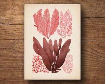 Botanical Print on Canvas, Canvas Print, Seaweed Art, Scientific Illustration, Coastal Art, Watercolor Print, Canvas Prints, Beach Decor