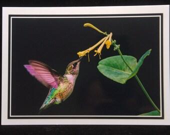 A Hummingbird Gathering Nectar 5x7 Blank Card By ThomasMinutoloPhotos