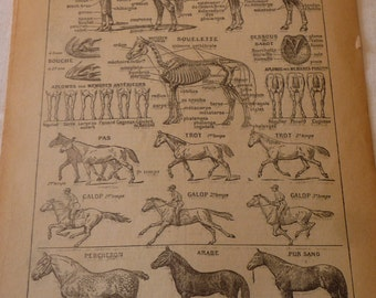 French Lithograph - Horses - 1920s engraving - original page from French Dictionary - Petit Larousse