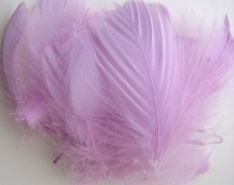 BULK / Lilac Goose Coquille Feathers  / 100 Loose Feathers