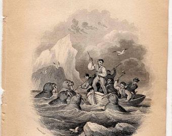 1836 WALRUS HUNTING ANTIQUE engraving - original antique print - sea life marine mammal Jardine Lizar natural history print