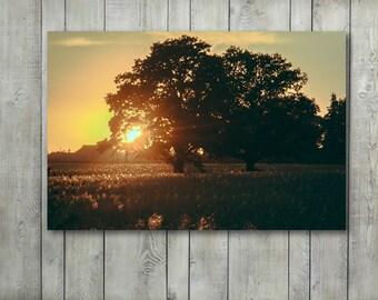 Tree Wall Art,Oak Tree Canvas Art Prints,Wall Decor,Photography Prints,home decor,Canvas Print,Landscape Photography,Large Wall Art