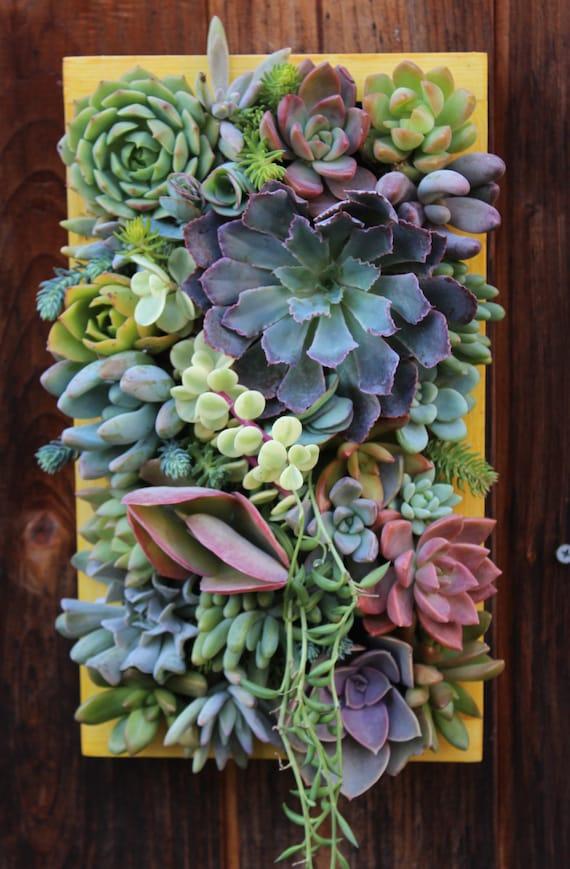 sale 12 x 7custom succulent vertical garden