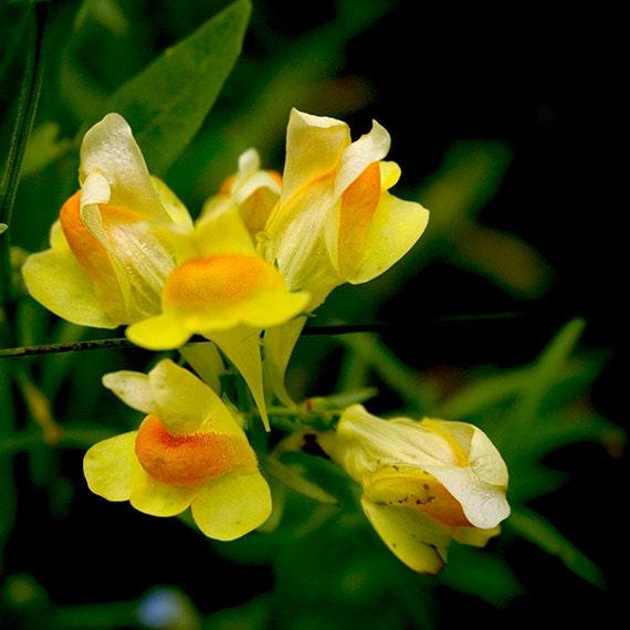 Yellow Wildflower Wall ArtYellow Spring Wildflower