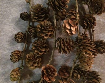 10 Stems of Larch Cones: Christmas,Weddings,Theatre,wreath garlands & swags