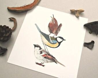 3 Little Birds - Bird Print , print art , birds ,nature art , wren , great tit , house sparrow , 8 inch x 8 inch