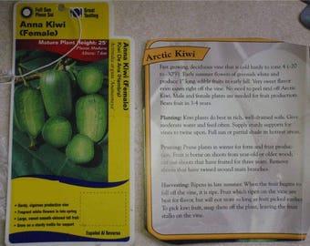Actinidia arguta 1 year old rooted plant, Ananasnaya, Anna kiwi, Edible HARDY Fruit Vine