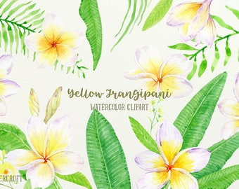 Frangipani Clip Art, Watercolor yellow frangipani, green foliage, botanical frangipani for instant download