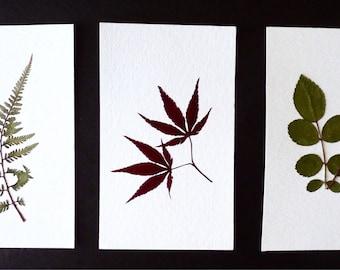 Real Pressed Flower Art Pressed Botanical Art Herbarium Collection 3x5
