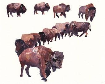 Bison Herd - Large Archival Print