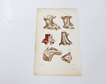 1846 Anatomy Muscles Neck Eye Arm Medicine Antique Book Plate  4 1/8 x 7 - Color Chromolithograph
