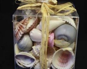 The Shell Connection Spring Shell Gift Box, 1 box, Assorted Pastel Sea Shell Mix, 1.50 pounds