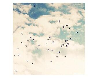 Bird photography. Flying birds. Art. Cloudy Sky. Blue. white. nature. summer. bird home decor