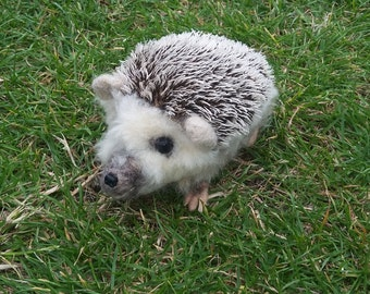 Realistic Pet Portrait/ Animal/ Hedgehog Needle Felt Large 20cm