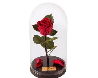 Forever Rose Beauty And The Beast, Home Decor, Real Red Rose, infinity rose, Enchanted Rose, Mothers Day, Anniversary Gift, Eternal Rose