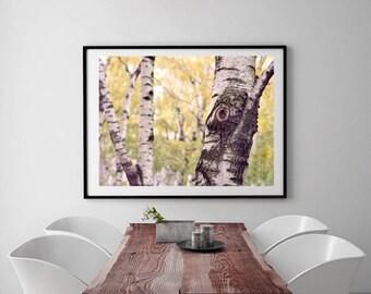 Large photography, birch tree wall art, green yellow grey home decor, nature art print 16x20, dining room wall art living room office decor