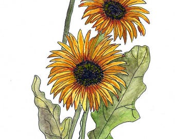 Original Pen, Ink and Watercolor Painting of African Daisies / Earthtone Colors / Yellow and Orange / Sz 9 x 12
