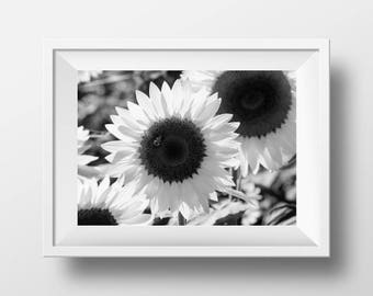 Sunflower Wall Decor, Sunflower Wall Art, Black and White Flower Print, Extra Large Wall Art, Nature Office Print, Botanical Photography