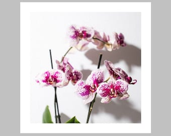 Orchid en Couleur 01 colorful orchid art print: Glicée, Wall Art, Photography, Floral, Zen, Botanical