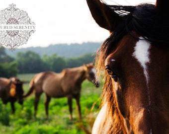 Herd of curious horses