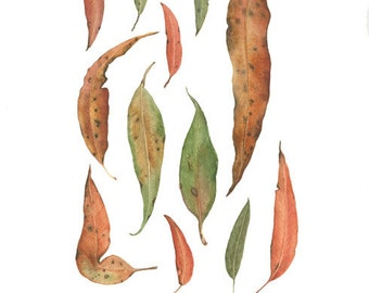 Archival print of a collection of gum leaves, from an original watercolour painting.