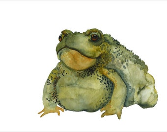 toad watercolor- Burp- toad art archival print