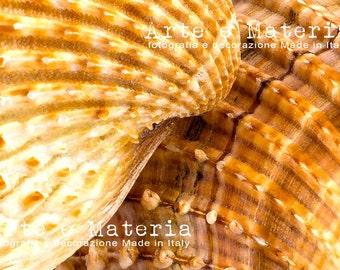 Conchiglia gialla. Fotografia close up di conchiglia marina. Foto natura, astratta. Toni caldi, giallo e marrone. Regalo per nozze al mare.
