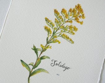 Goldenrod Watercolor Print - Wildflower Print - Botanical Watercolor Illustration